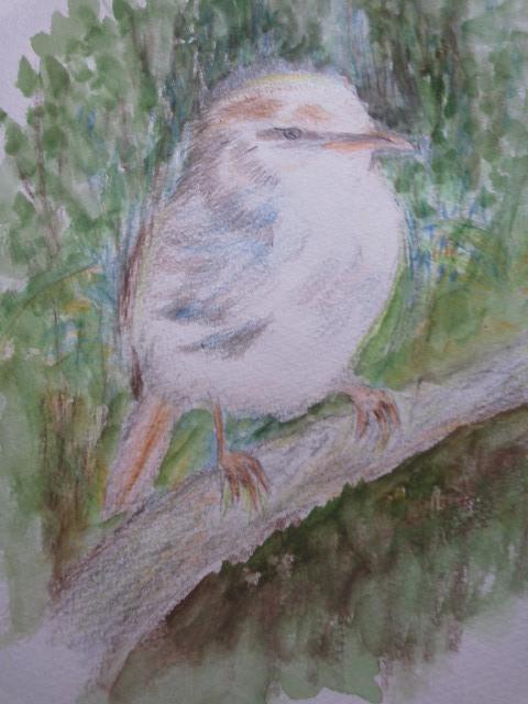 CAM55PCO japanese bush warbler (2)
