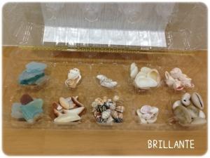与論島の貝