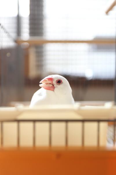 uchiwa futuuno seed desu (4)