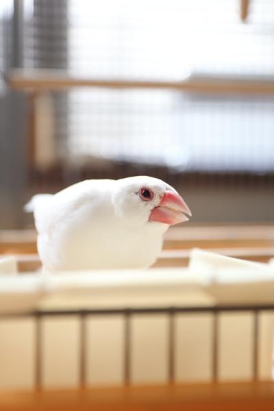 uchiwa futuuno seed desu (2)