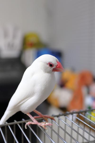 poyoonn (1)