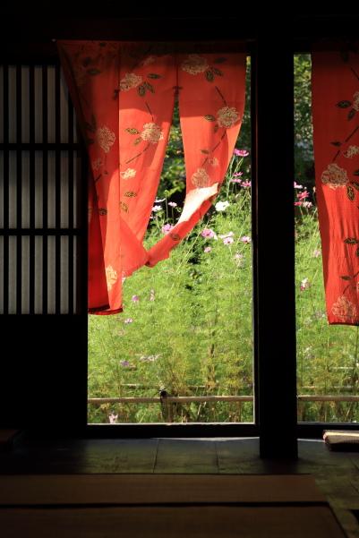 gokayama de kosumosu (3)