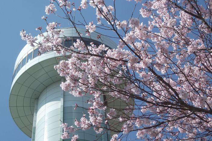 14-4-1-1すいとぴあ桜祭