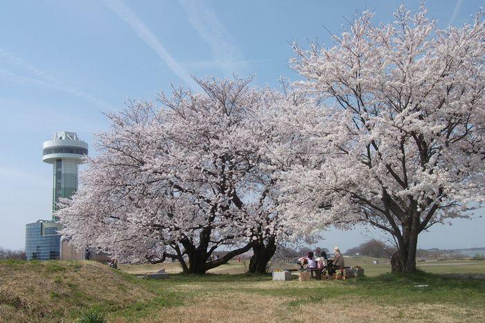 14-4-2-1三本桜とすいとぴあ