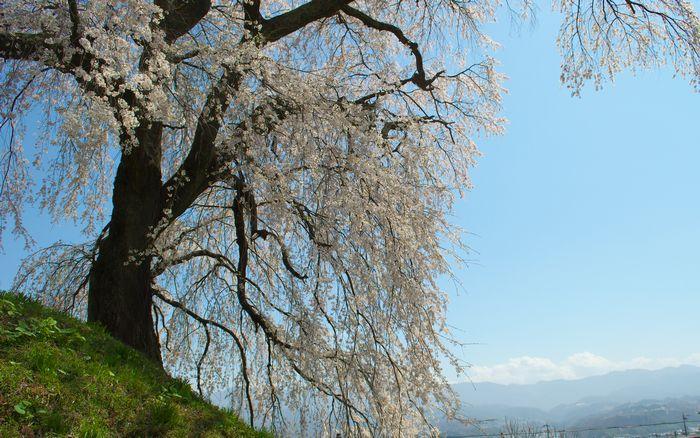 14-4-12-1石塚の桜DSC_0052