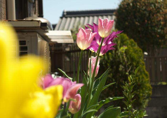 14-4-20-1自宅の庭に咲く花