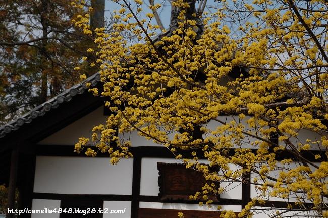 0329hokkeji-2.jpg