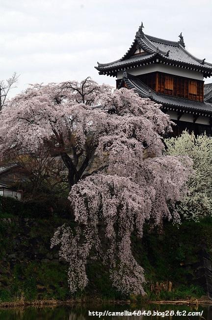 0329kouriyama-1.jpg