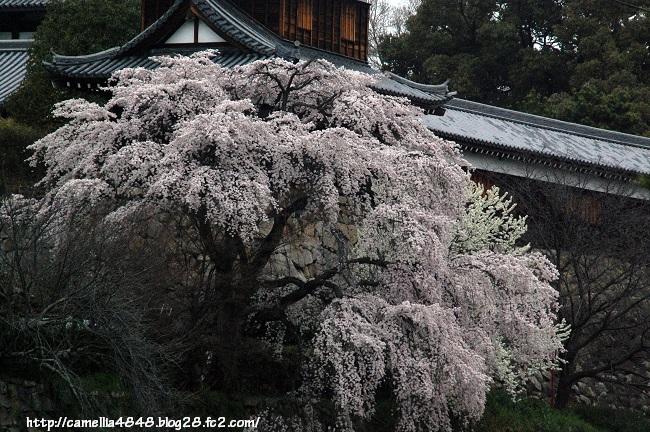 0329kouriyama-10.jpg