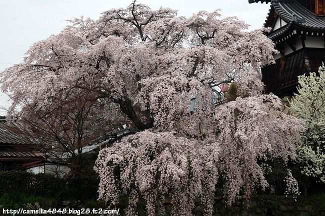 0329kouriyama-3.jpg