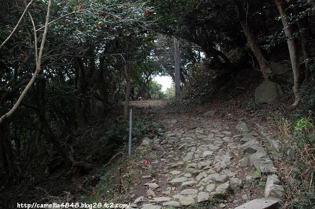 0405-tomogashima-1.jpg