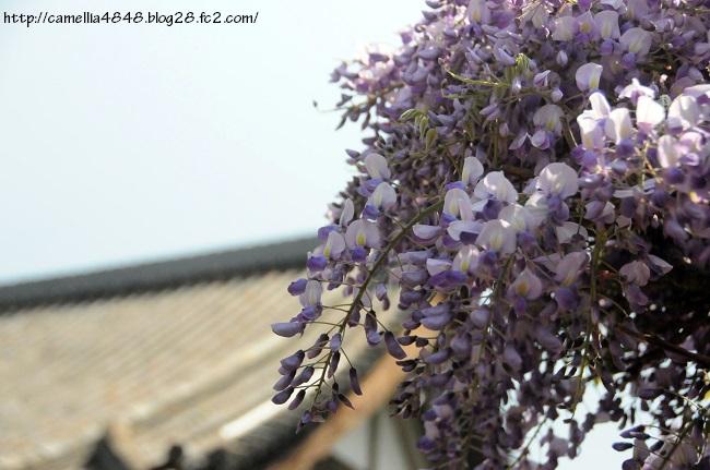 0419tyoufukuji-11.jpg