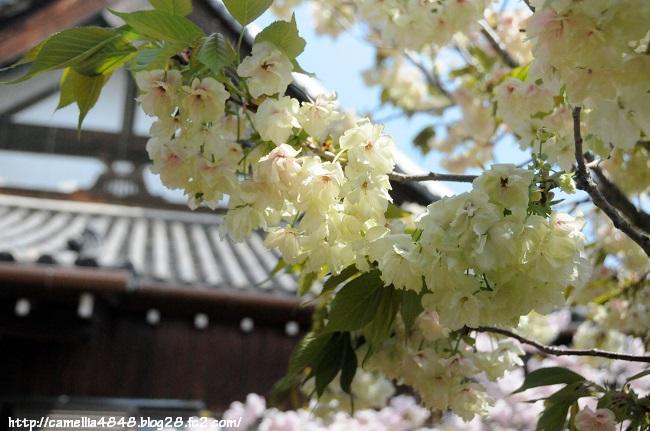 0419tyoufukuji-8.jpg