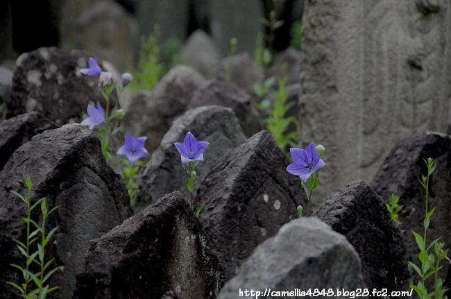 0614gangouji-10.jpg