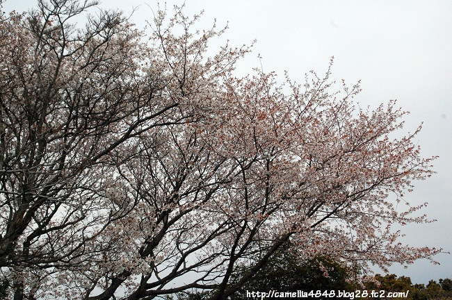 tomogashima0405-3.jpg