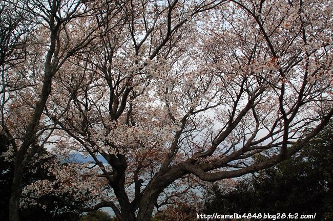 tomogashima0405-4.jpg