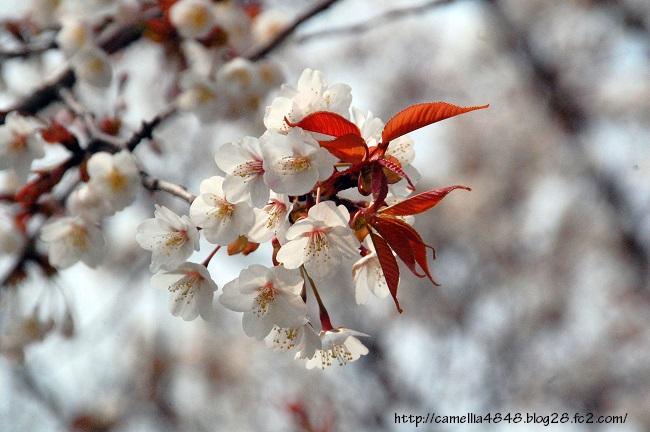 tomogashima0405-5.jpg