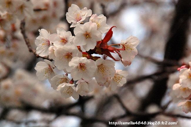tomogashima0405-6.jpg