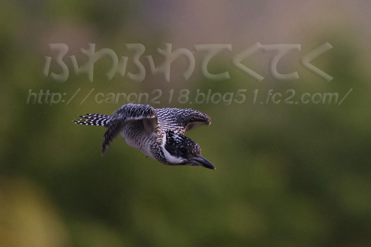 1DX_2987n_1405.jpg