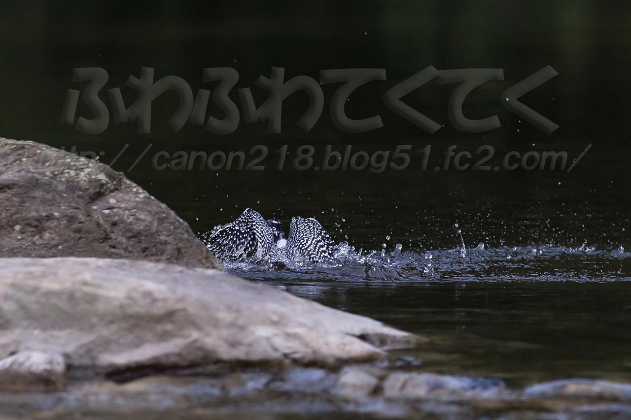 1DX_4463x_1409.jpg