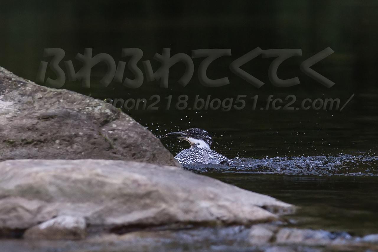 1DX_4466x_1409.jpg