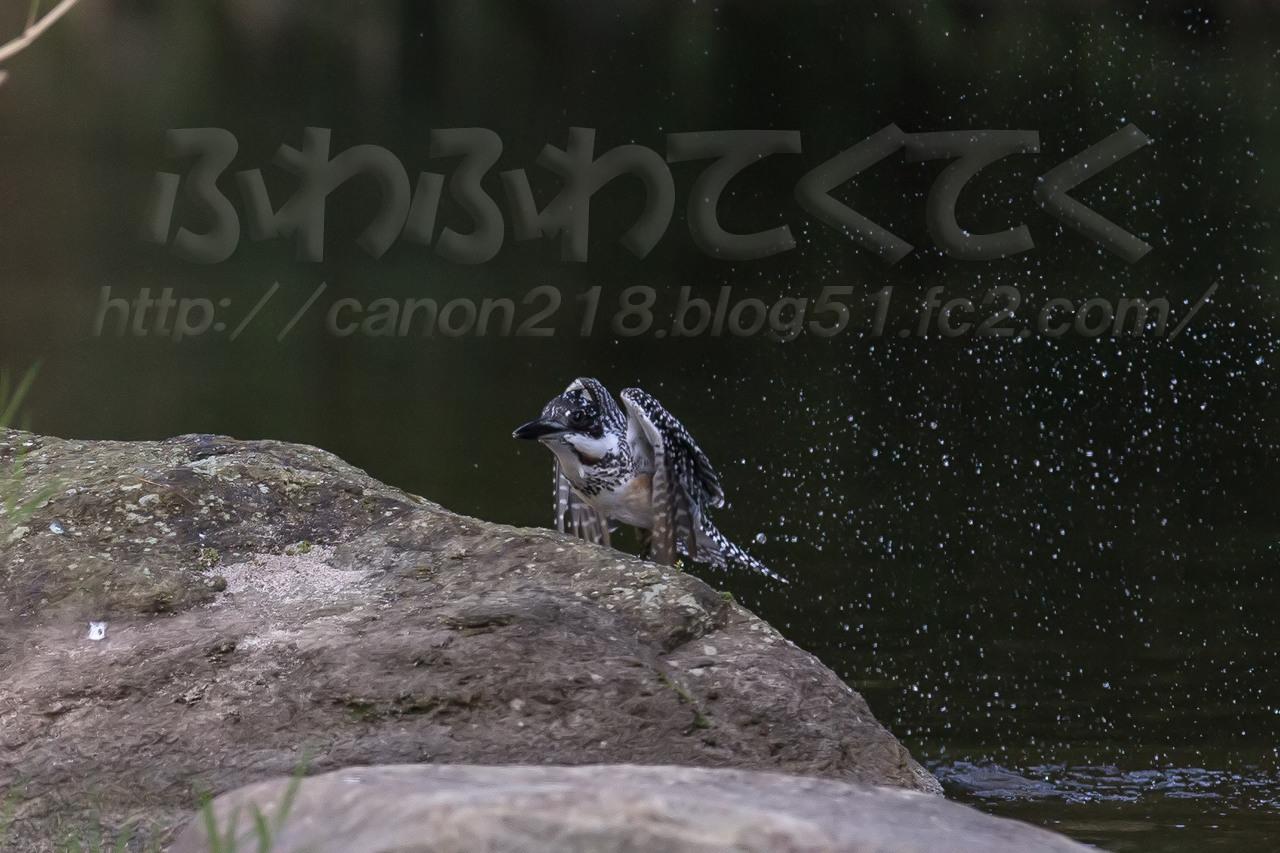 1DX_4476x_1409.jpg