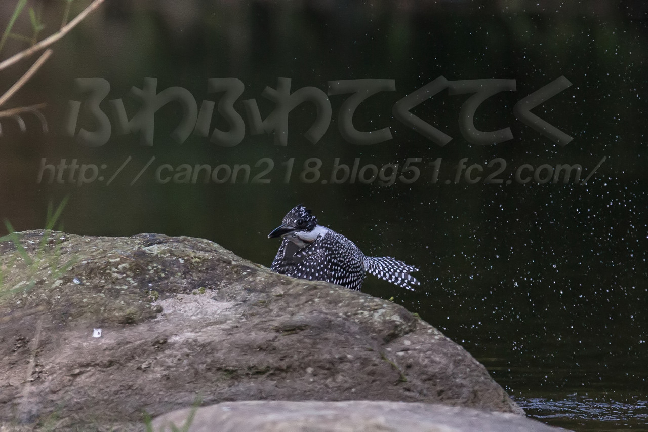 1DX_4477x_1409.jpg