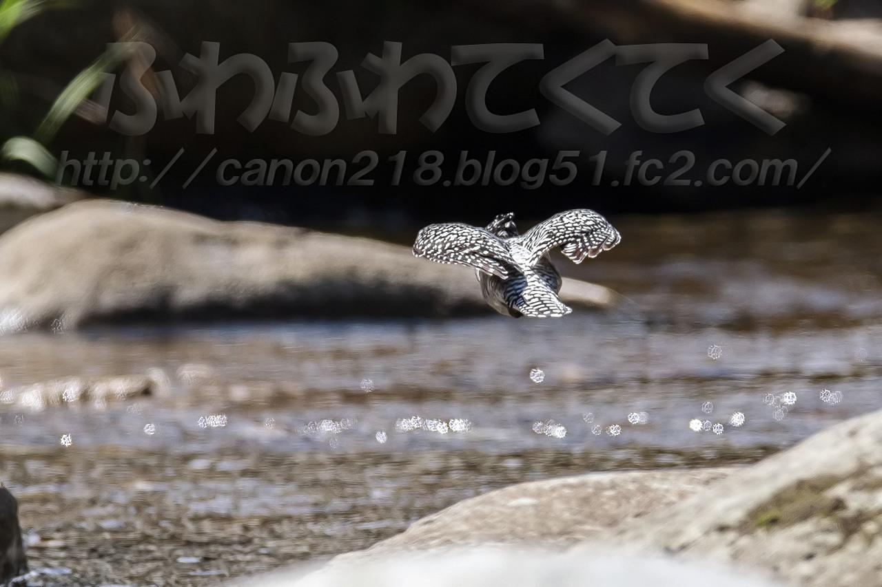 1DX_4678x_1409.jpg