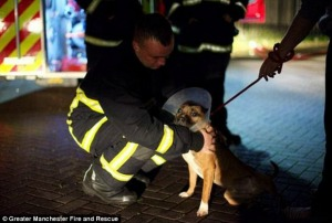1410479400400_wps_12_manchester_fire_dog_twitt.jpg