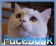 Cats Gallery のFacebookだよ