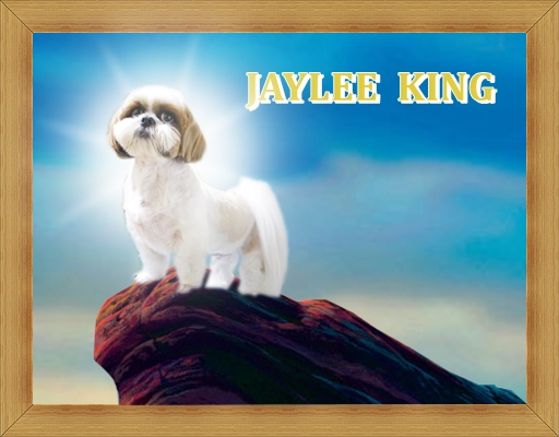 Jayleeking_1.jpg