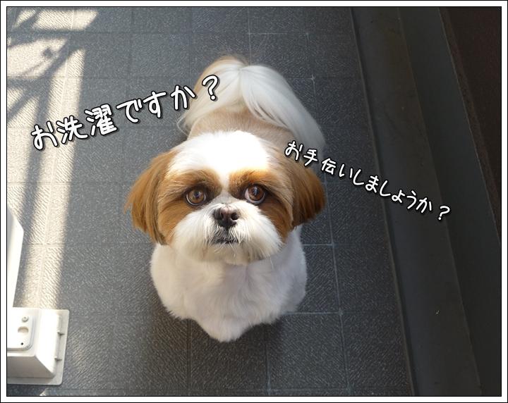 P1020777_1.jpg