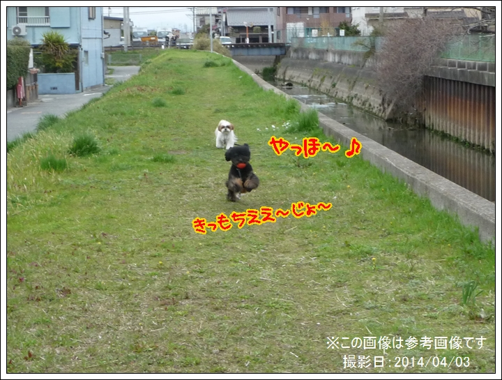 P1030260_1.jpg
