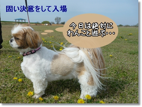 P1030529_1.jpg