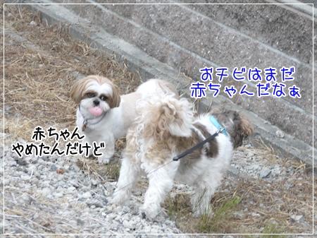 P1030541_1.jpg