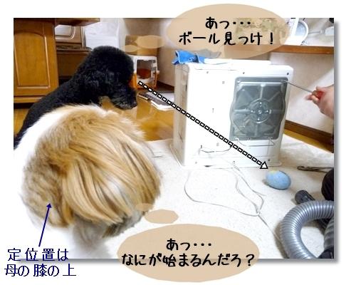 P1030661_2.jpg