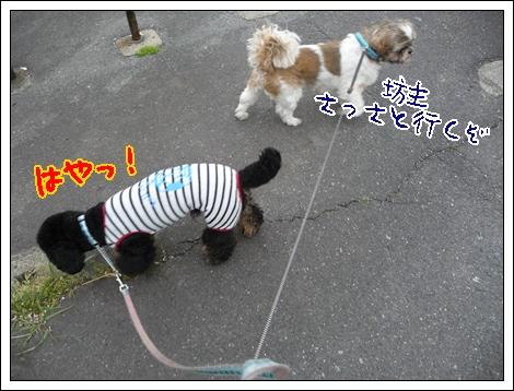 P1030698_1.jpg