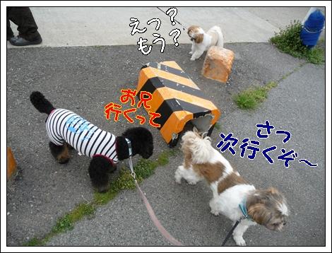 P1030702_1.jpg