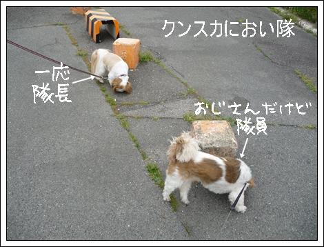 P1030703_1.jpg