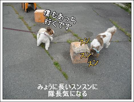 P1030704_1.jpg
