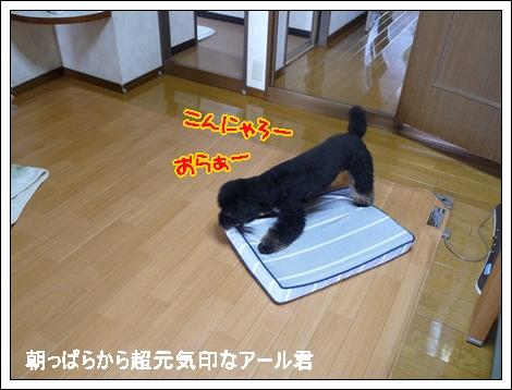 P1030721_1.jpg