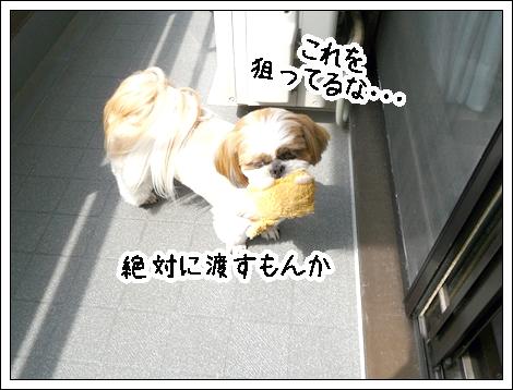 P1030734_1.jpg