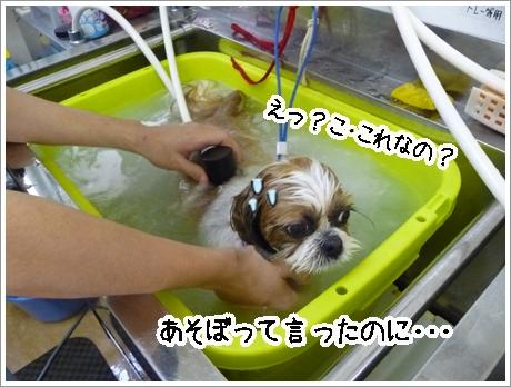 P1030833_1.jpg