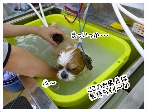 P1030837_1.jpg