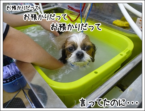 P1030838_1.jpg