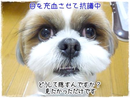 P1040573_1.jpg