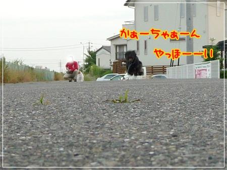 P1050027_1.jpg