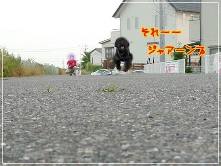 P1050028_1.jpg