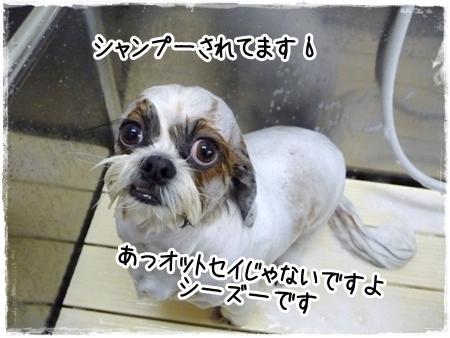 P1050071_1.jpg