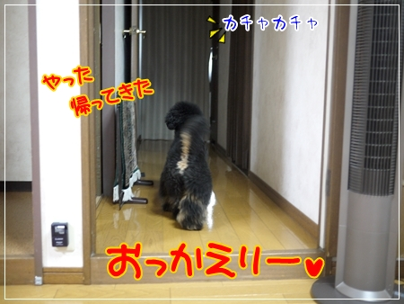 P1050082_1.jpg